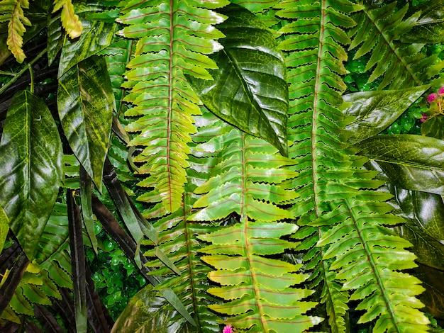식물이 많은 녹색 열대 배경