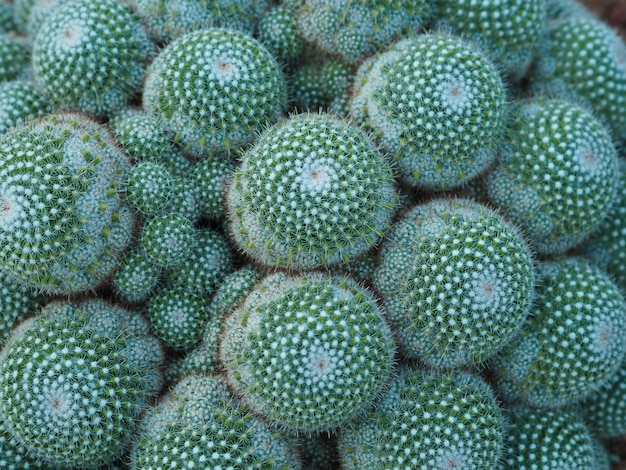 Green tropical cactus background, natural background and wallpaper.