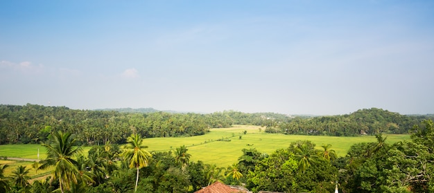 セイロンの谷の緑の熱帯林。スリランカの風景