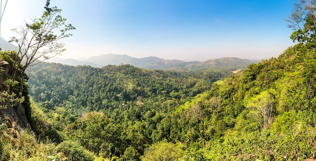 Green tropical forest in a valley on ceylon