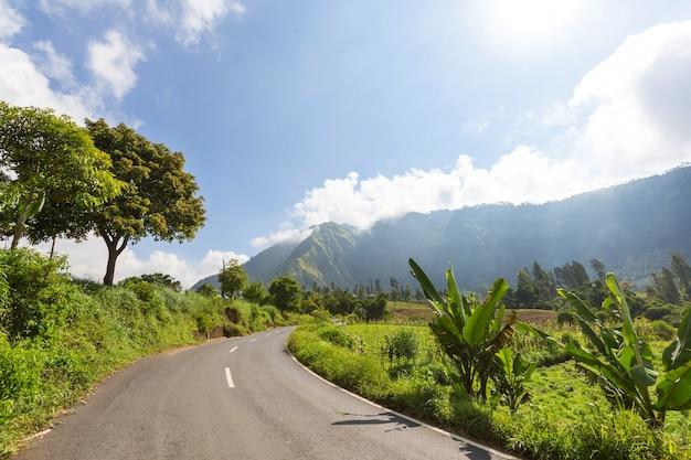Зеленые тропические пейзажи на острове ява, индонезия