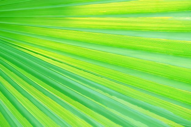 Зеленый тропический лист, крупным планом