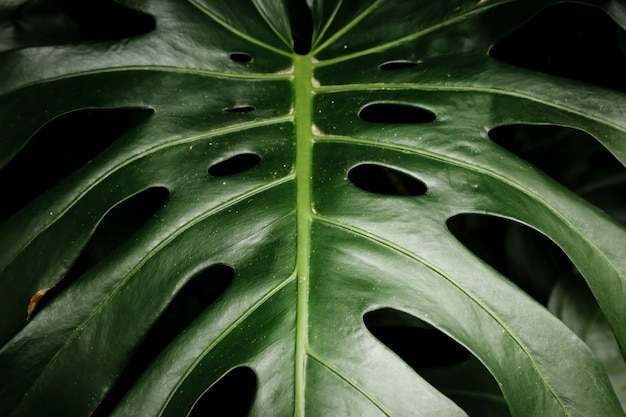 Green tropical leaf closeup