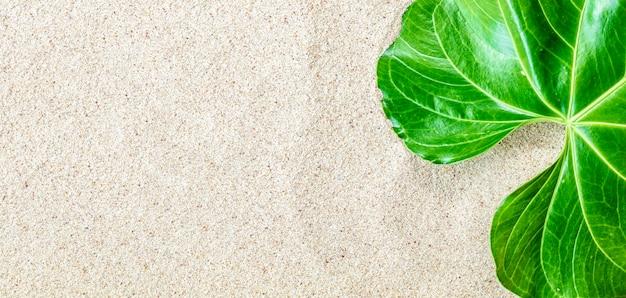 하얀 해변 모래 배경, 평면도, 복사 공간, 배너, ninimalistic 개념에 녹색 열 대 잎