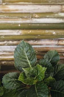 Зеленые тропические листья против бамбуковой планки.