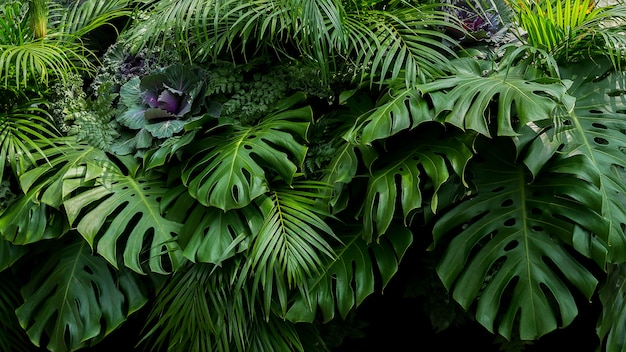 Green tropical leaves of monstera, fern, and palm fronds the rainforest foliage plant bush floral arrangement on dark background, natural leaf texture nature background.