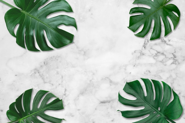 Green tropical leaves monstera on white marble pattern tiles background