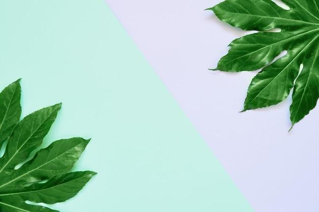 カラフルな背景に緑の熱帯の葉。コピースペース、上面図。