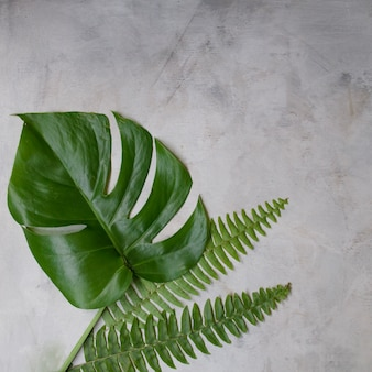 흰색 바탕에 녹색 열 대 잎. 평평한 누워, 평면도. 복사 공간 작품 모형.