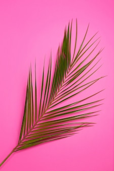 Green tropical leaves palm tree on pink background