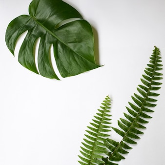 Green tropical leaves on white background.