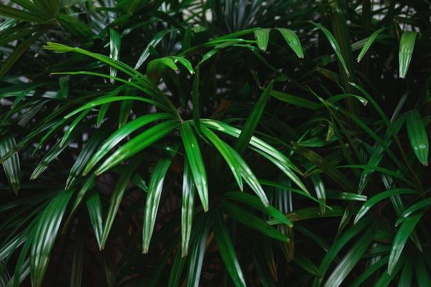 Зеленые тропические листья