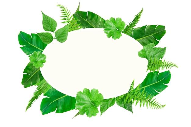 Шаблон рамки с зелеными тропическими овальными листьями