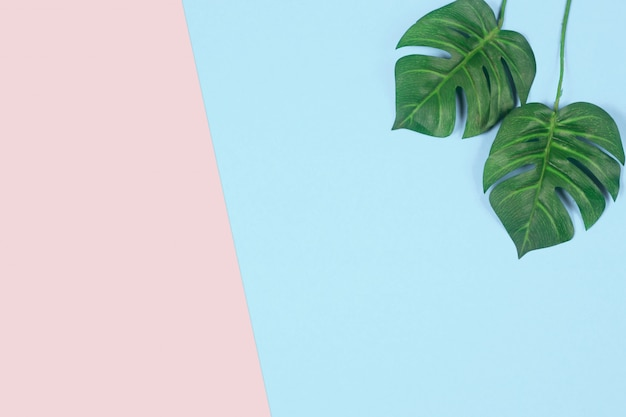 Green tropical palm leaf on pastel colored background. flat lay