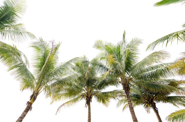 녹색 열 대 야 자 잎 열 대 신선한 코코넛 야 자 나뭇잎 프레임 흰색 배경에 고립.