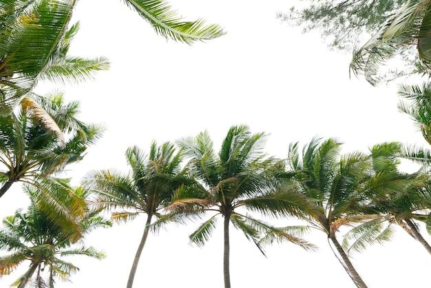 녹색 열 대 야자수 잎 열 대 신선한 코코넛 야자수 잎 프레임 흰색 배경에 고립.