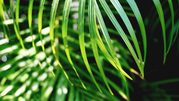 녹색 열대 야자 잎, 꽃 패턴 배경, 실제 사진