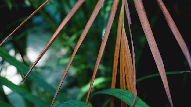 緑の熱帯ヤシの葉、花柄の背景、実際の写真