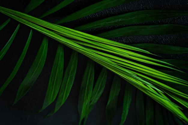 Зеленые тропические пальмы листья на темном фоне. тропический лес натуральный, зеленый узор.