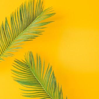밝은 노란색에 녹색 열 대 야자수 잎