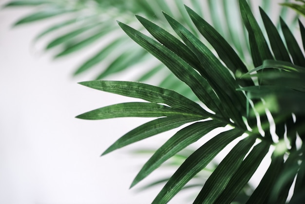 Green tropical palm leaves on white wall surface