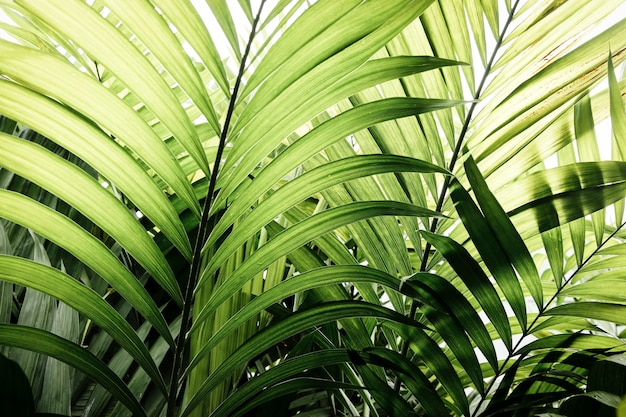 Green tropical plants and leaves