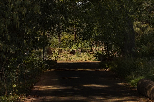 밝고 화창한 날에 땅에 그늘 그늘을 떨어 뜨리는 나무의 녹색 터널