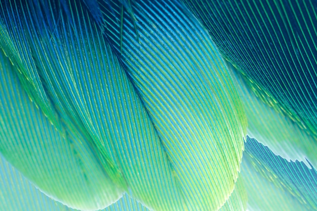 Green turquoise and blue feather texture background