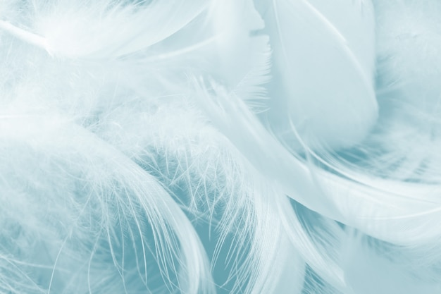 Green turquoise feather background