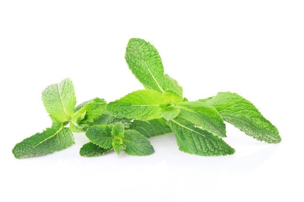 白で隔離されるミントの緑の小枝
