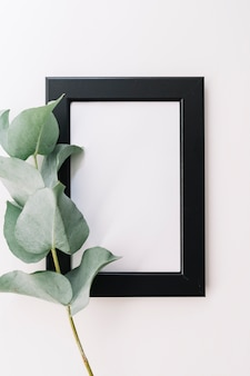 Green twig with blank border frame on white background