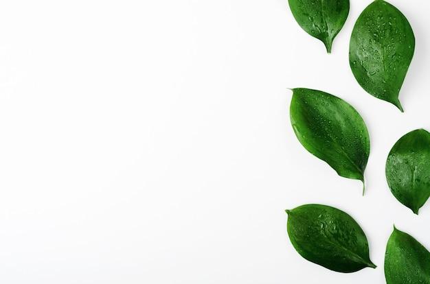 Зеленые веточки листья вид сверху рамка с копией пространства