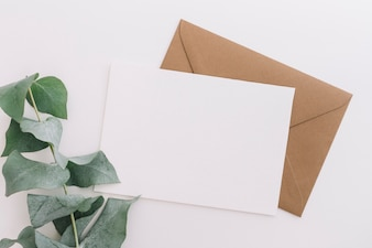 Green twigs on white and brown envelope on white background