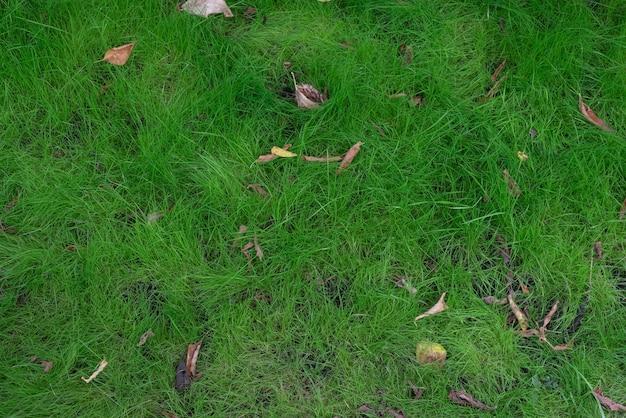 Зеленый неопрятный закон. дикая трава с опавшими листьями. естественный фон. экология.