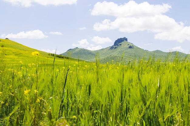 Зеленая долина и поле, весенний пейзаж в грузии