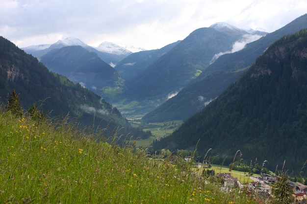 멀리 눈 덮인 산이 있는 녹색 계곡