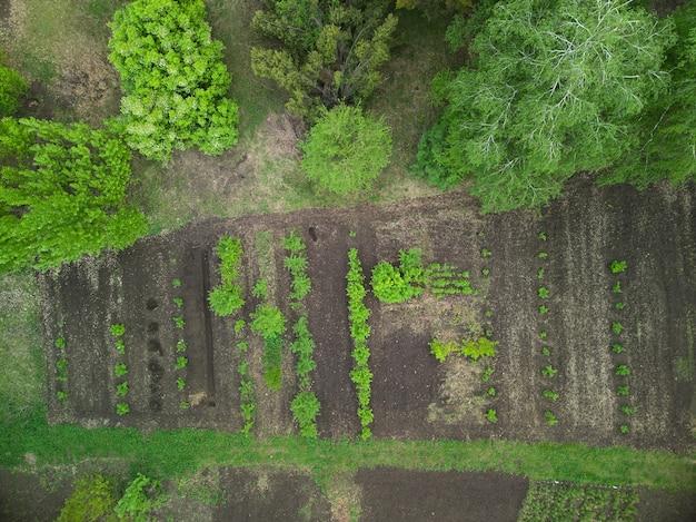 Зеленый огород, европа украина, вид сверху с дрона