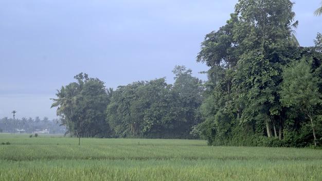 Green villages