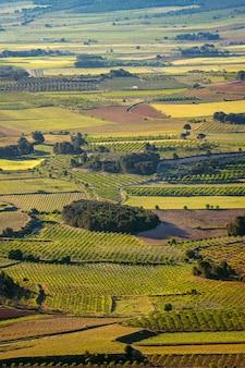 La font de la figuera valencian tuscany spain의 녹색 포도밭 수직 풍경