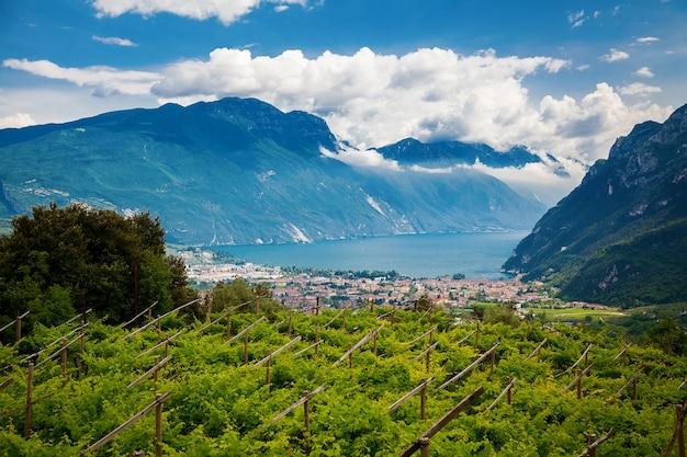 リーヴァデルガルダと山々を背景にした緑のブドウ園、トレンティーノ、イタリア