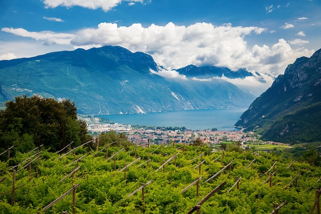 Green vineyards with riva del garda and mountains on a background, trentino, italy