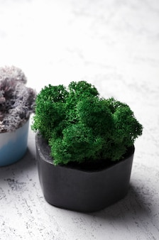 Green and violet moss in concrete pot. modern home decoration