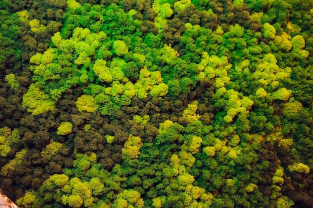 실내 장식에서 다른 낙 엽 식물의 녹색 벽. 아름다운 생생한 녹색 잎 벽지 및 환경 장면.