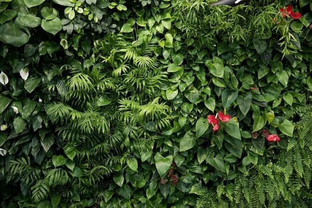 室内装飾のさまざまな落葉植物の緑の壁