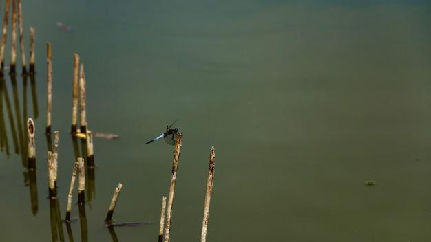 緑色の水とトンボ