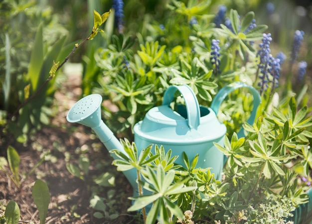 A green watering can stands in the garden between the flowers