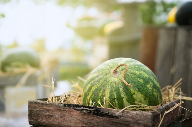 Green watermelon on straw in wooden crate