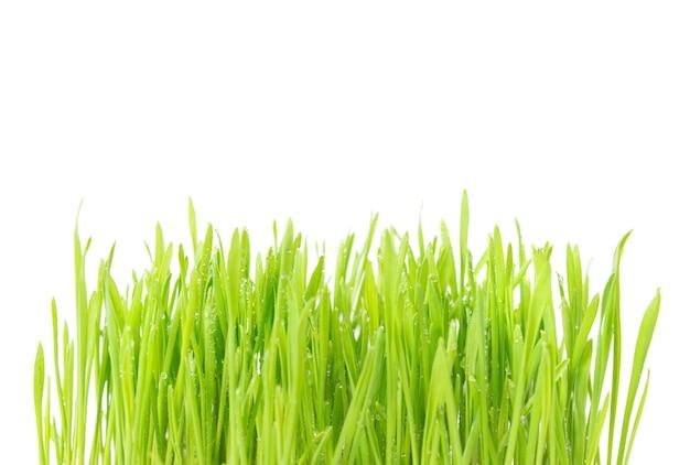 白い背景で隔離の水滴と緑の湿った草