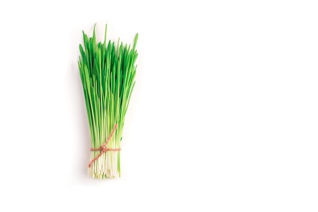 녹색 밀 싹은 묶음으로 모아서 흰색 테이블에 밧줄 실로 묶습니다. 상단에서보기. 건강 식품의 개념, 슈퍼 푸드.