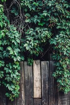 木の板の背景にベリーと緑の野生のブドウ園。